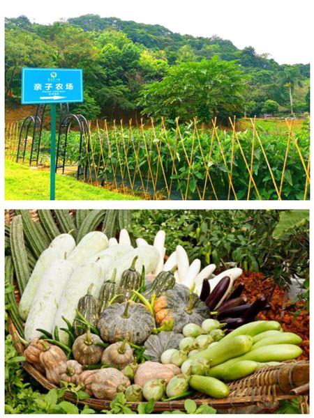 """广州客天下:打造""""桃花源""""中的森林氧吧"""